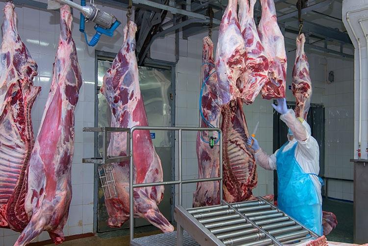 Gestão de frigorífico: inovação e modernização gera lucro e aumento de produtividade